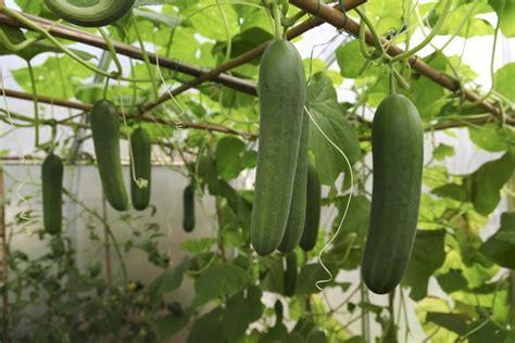 hanging gardens arizona