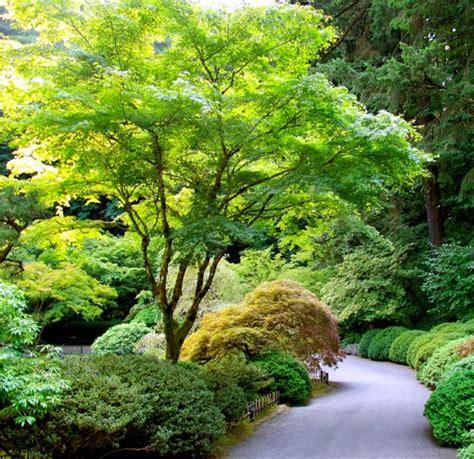 Bonsai Baum Garten 435 by Die Besten 25 Ahorn Strauch Ideen Auf