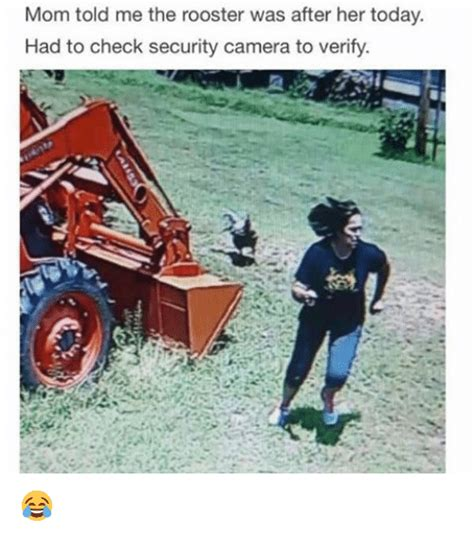 rooster meme 25 best memes about rooster rooster memes