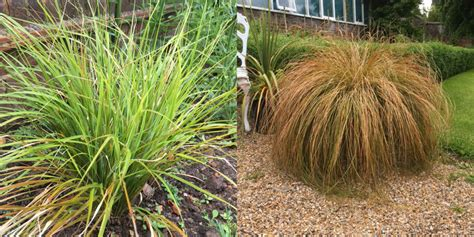 ashdown park hotel s tips for using ornamental grasses in your garden the english garden