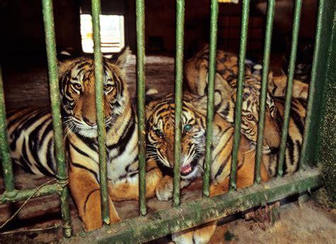Gaps in China's Wildlife Laws – Global Wildlife ...