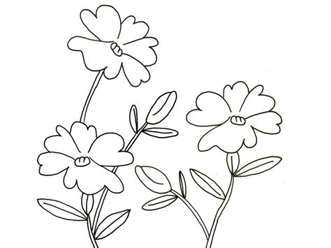 coloring pictures of flowers for preschoolers flowers worksheets for preschoolers 2013 coloring point