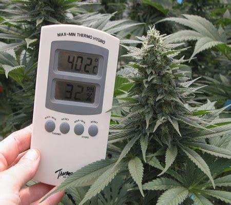 cannabis room temperature growing marijuana indoors