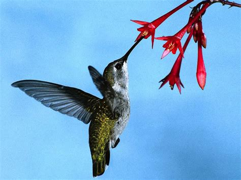 animals of planet earth hummingbirds