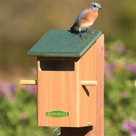 sparrow bird house plans image gallery sparrow birdhouse