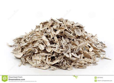 empty sunflower seeds stock photography image 23978452