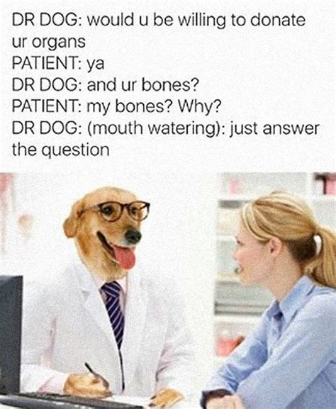Dog Doctor Meme - doctor dog asking the important questions