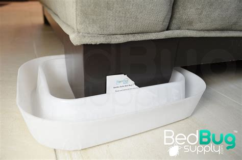 bed bug interceptors how to get rid of bed bugs on couches and furniture