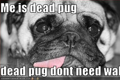 pug pictures with captions pin by eddie n debbie fitzwater on pugs for becky