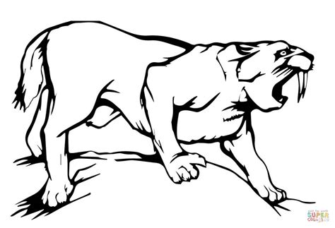 Saber Tooth Tiger Coloring Pages sabre tooth tiger coloring page free printable coloring