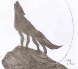 how to draw a wolf head mexican wolf step 4 1 000000084951