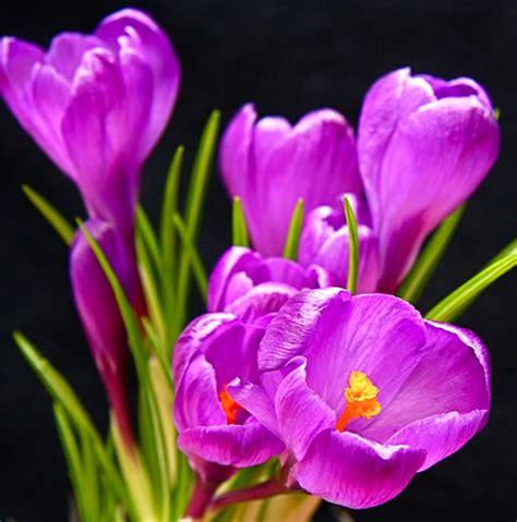 imagenes flores moradas image gallery imagenes de flores moradas