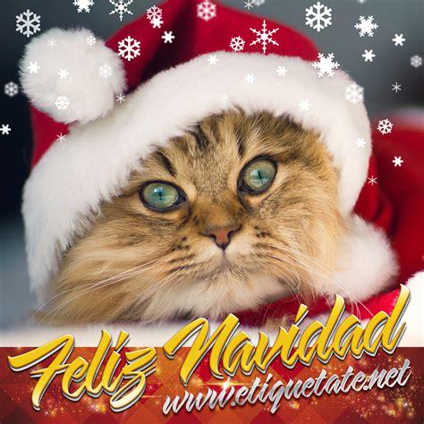 imagenes navidad gatitos pin imagechef descarga gratis para el blackberry on pinterest