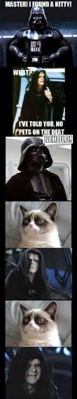 Star Wars Cat Meme - funny star wars pictures 15
