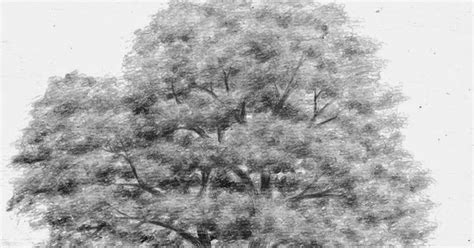 tutorial gambar pohon teknik menggambar pohon teknik menggambar