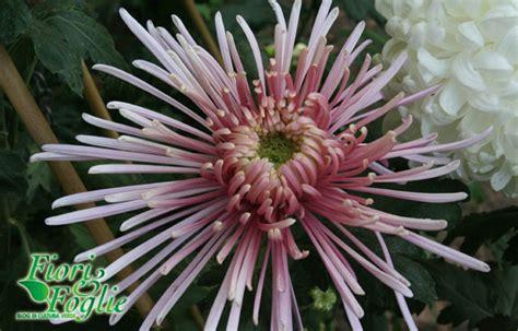 fiori per i morti crisantemi da fiori per i morti a bouquet stilosi fiori