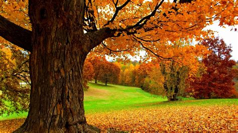 tree background hd photos spectacular autumn hd wallpaper wallpapers pictures photos