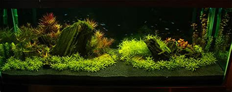aquascape substrate substrate aquascape 28 images aquascape corner