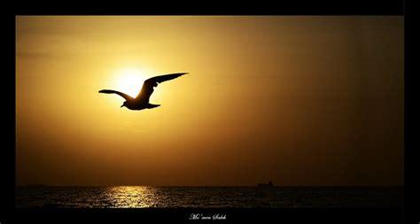 seagull silhouette by momensaleh on deviantart
