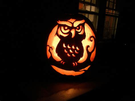 owl pumpkin carving flickr photo sharing