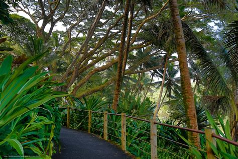 Hawaii Tropical Botanical Garden by Wallpaper Hawaii Tropical Botanical Garden
