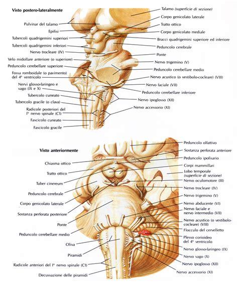pavimento quarto ventricolo sindromi alterne medmedicine