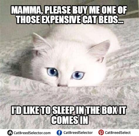 Woopty Doo Meme - white cat memes cat breed 28 images kitten memes cat