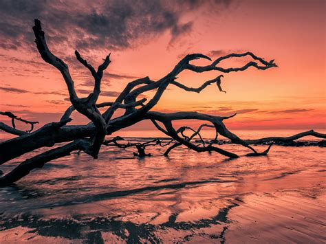 sunset red sky sea beach cial tree branches beautiful hd
