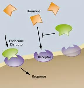 Air Fresheners Endocrine Disruptors Xenoestrogens