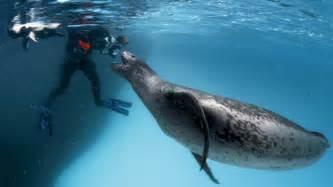 seal ai killing seals