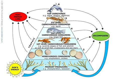 ecosystem food web diagram diagram ecosystem food chain diagram