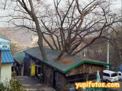 Komil House tejados vegetalizados y terrazas jardin