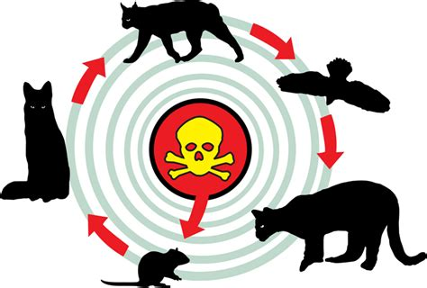 generation anticoagulant rodenticides claw applauds los angeles for discontinuing second