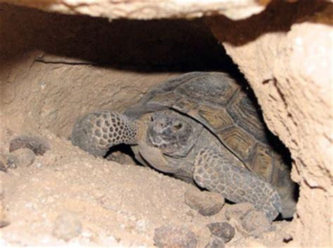 imagenes de animales que hibernan animales que hibernan desde los polos argentina los