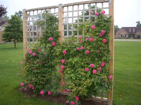 ideas for climbing rose supports bushes my husband and i built these these were easy to build trellis