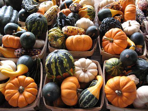 preserving pumpkins gourds flickr photo