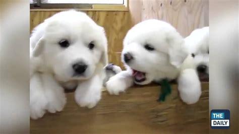 imagenes de animales lindos y tiernos los cachorros mas tiernos adorables divertidos y