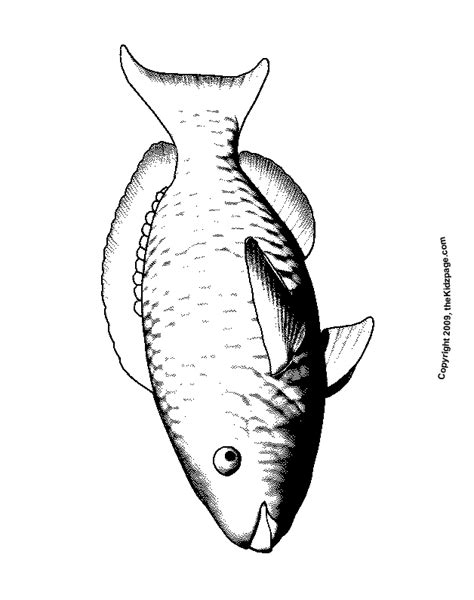coloring pages of parrot fish parrot fish free coloring pages for kids printable
