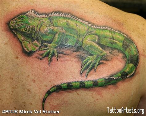 iguana lizard by mirek vel stotker artists org