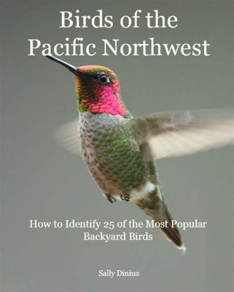 birds of the pacific northwest how to identify 25 of the