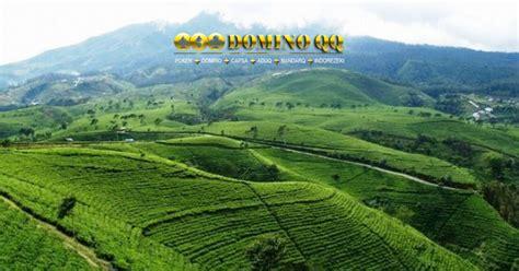 Teh Hijau Kemuning nikmati pesona hijau kebun teh kemuning news