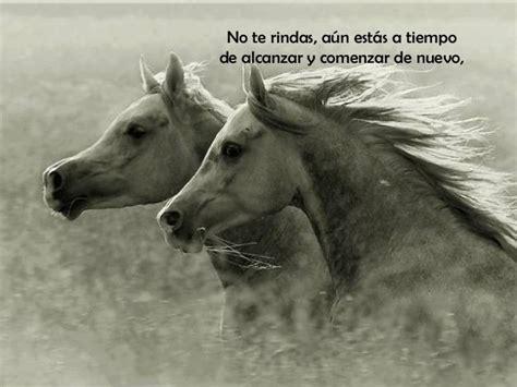 imagenes romanticas con caballos caballos y frases