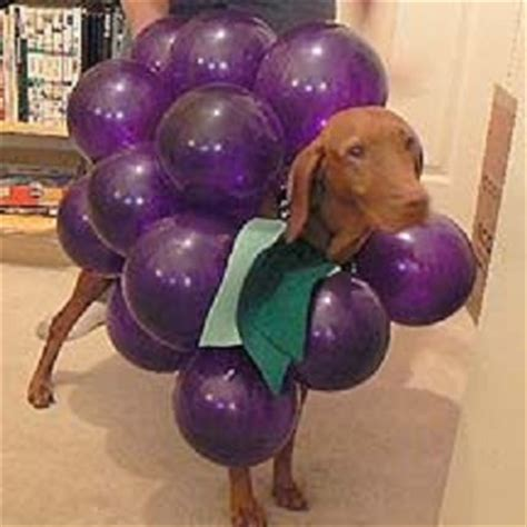 grapes dogs to the wire hair 5 diy costumes for your