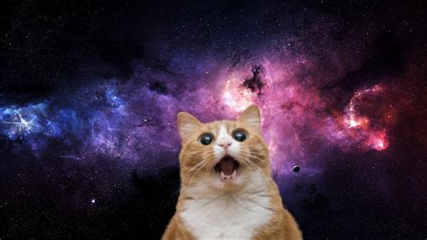 Cat In Space space cat wallpaper 63 images
