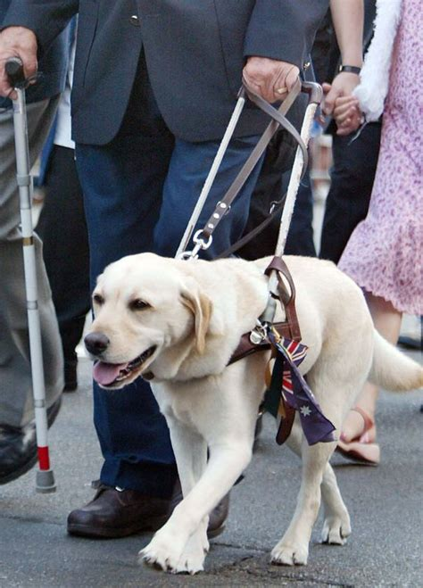 Activities For Blind Dogs National Seeing Eye Dog Day Central Bark