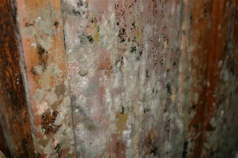 After the flood, the menace of mold   The Why Files