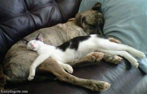 comfy comfort dog and cat comfy funnydogsite com