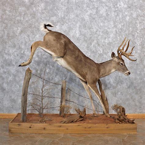 l bases for sale half body deer mounts related keywords half body deer