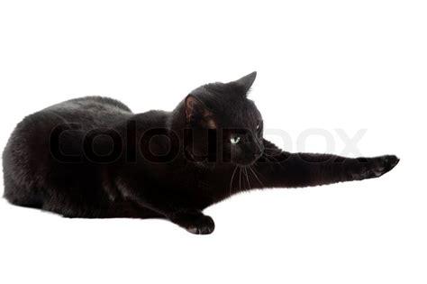 Caterpillar Ct11248 Free Box Yellow Black black cat isolated on the white background stock photo colourbox