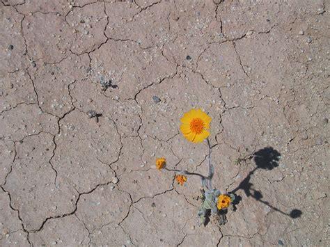desert flower desert flower a story of ultimate survival hey virginia